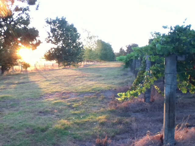 Jarvis_Estate_Winery_and_Nature_Based_Camping-Southern-Camp-Area