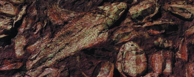 Canowindra Fish Fossil